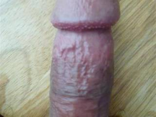 THIS  MY  COCK